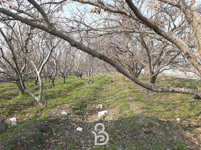۱۵۰۰ متر باغ سه بر در ابراهیم اباد