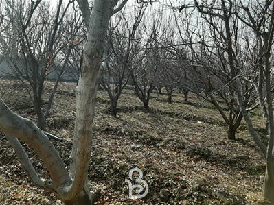 ۴۳۰ متر باغ با ۳۰ متر بنا در کردزار