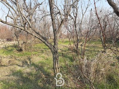 400 متر باغچه پر درخت در ابراهیم آباد