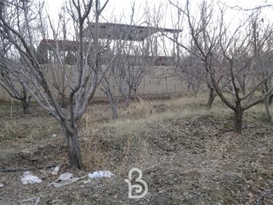 500 متر باغ خام چهار دیوار قجر آباد