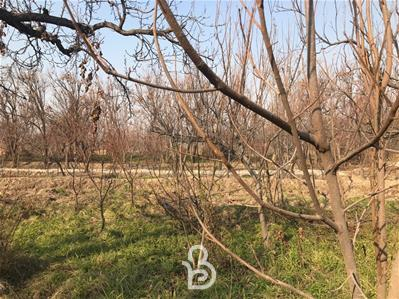 باغ خام ۱۰۰۰ متری ابراهیم آباد