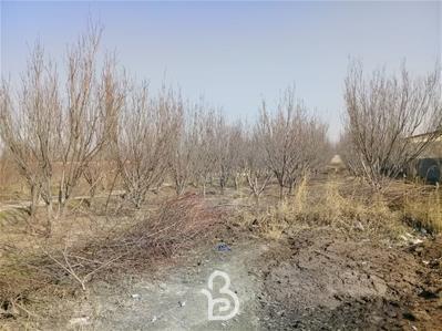 500 متر باغ خام لم آباد ملارد