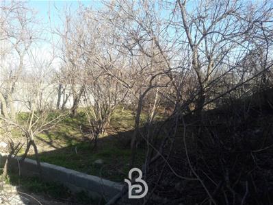 باغچه 350 متری قجر اباد