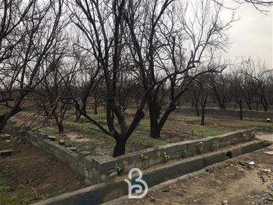 باغ خام 4 دیوار کردزار