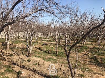باغ خام 6000 هزار متر خ ایروانی
