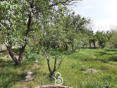 3500 متر باغ در ویلادشت